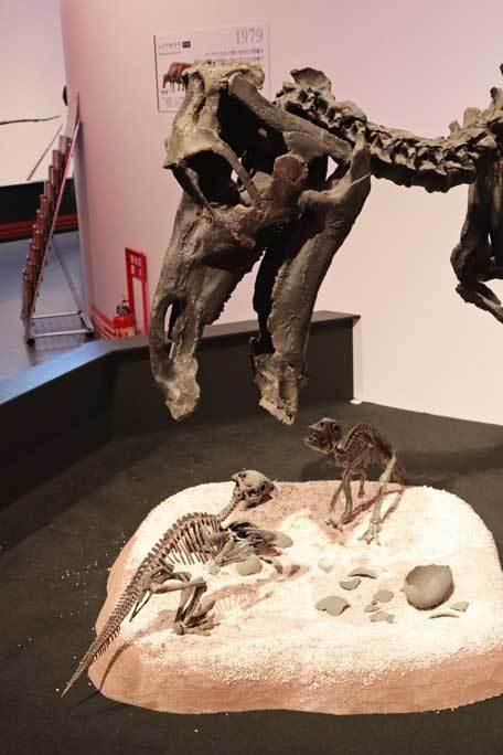 恐竜博2019~マイアサウラ_b0355317_21455830.jpg