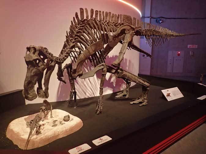 恐竜博2019~マイアサウラ_b0355317_21483053.jpg
