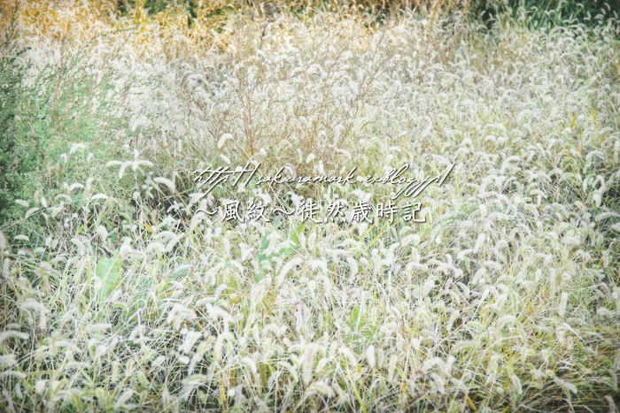 秋の野原。_f0235723_19514040.jpg