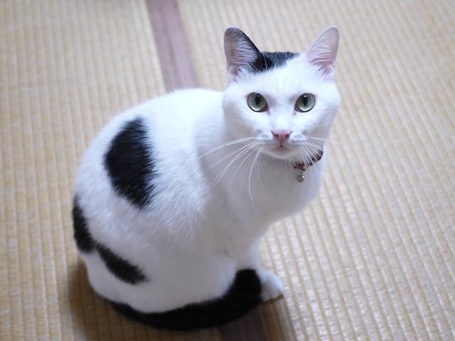 猫のお留守番 たらくん編。_a0143140_22001600.jpg