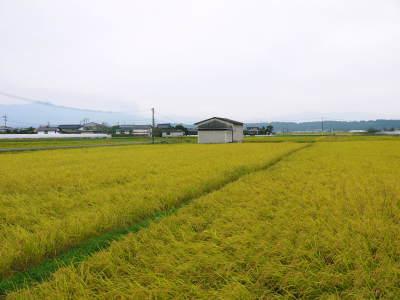 健康農園さんの無農薬栽培『雑穀米』『発芽玄米』大好評発売中!無農薬栽培のこだわりの様子!_a0254656_17521192.jpg
