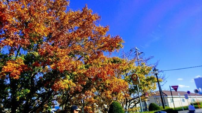 2019年11月4日(月)今朝の函館の天気と気温は。函館の紅葉、みどころは_b0106766_06583888.jpg