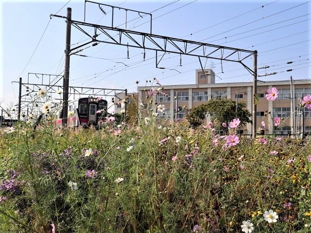 藤田八束の鉄道写真@青い森鉄道のモーリー君、秋の花が綺麗な青森駅トライアングル、生活の調和が素敵な花々と鉄道・・・・ガーデニング_d0181492_21122327.jpg
