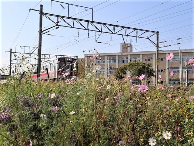 藤田八束の鉄道写真@青い森鉄道のモーリー君、秋の花が綺麗な青森駅トライアングル、生活の調和が素敵な花々と鉄道・・・・ガーデニング_d0181492_21123395.jpg