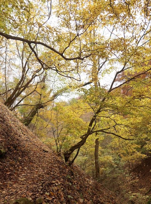 秋の山歩き_b0038919_23455108.jpg