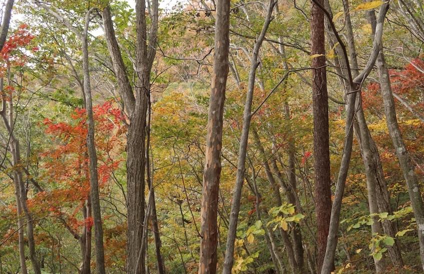 秋の山歩き_b0038919_23542781.jpg