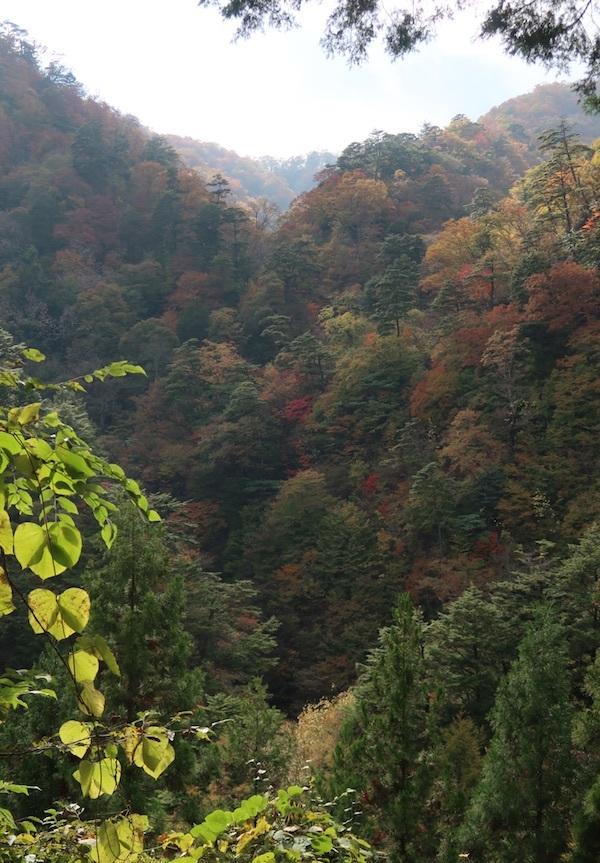 秋の山歩き_b0038919_23560743.jpg