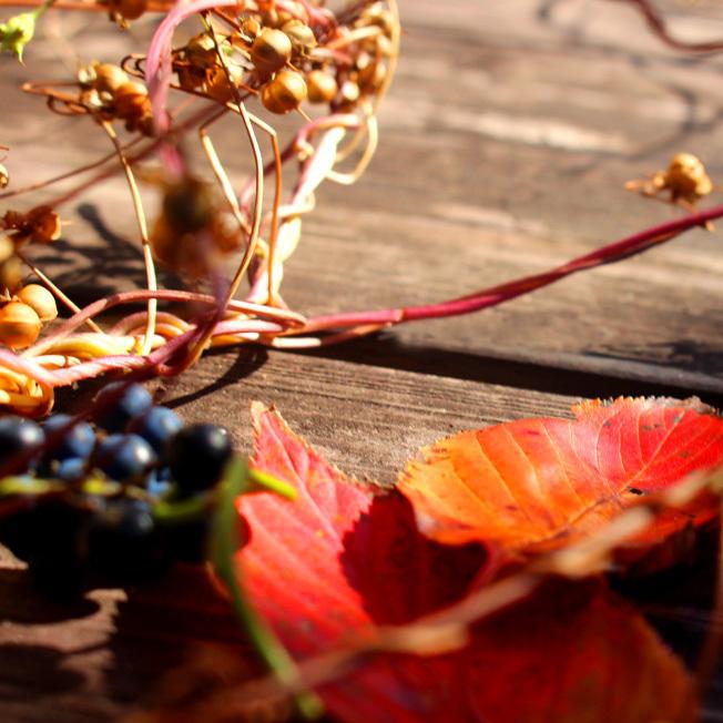 秋の実と紅葉を野草キャンドルに_a0329820_14044825.jpg