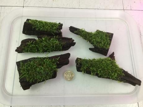 191107 熱帯魚 金魚 めだか 水草_f0189122_18541830.jpeg