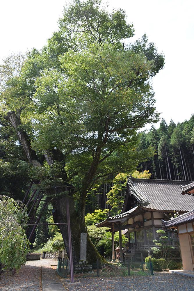 「生野の変」ゆかりの地を訪ねて。 その2 <延應寺>_e0158128_16543397.jpg