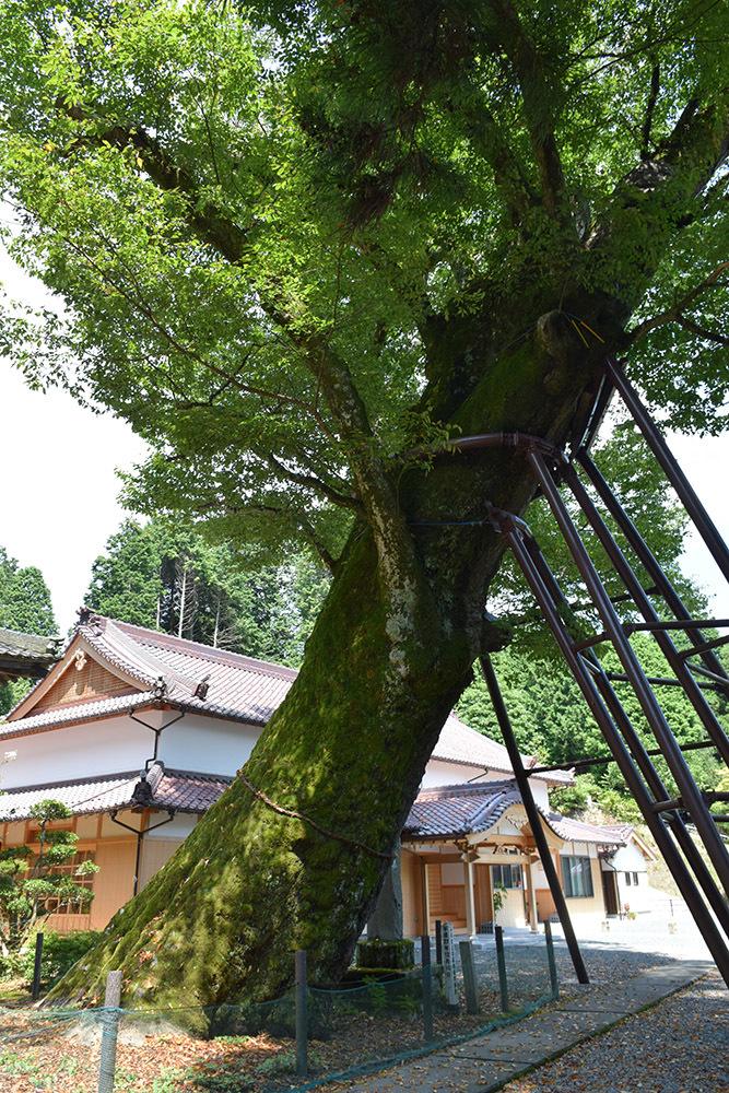 「生野の変」ゆかりの地を訪ねて。 その2 <延應寺>_e0158128_17002103.jpg