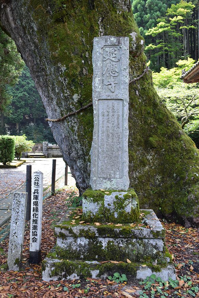 「生野の変」ゆかりの地を訪ねて。 その2 <延應寺>_e0158128_17022288.jpg