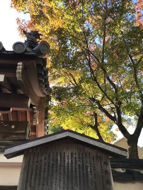 今日の東福寺_d0020139_15351203.jpeg