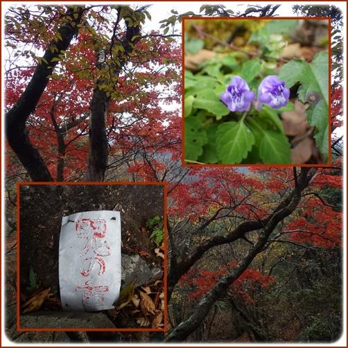 英彦山紅葉詣で・・裏英彦山を歩く_e0164643_13582053.jpg