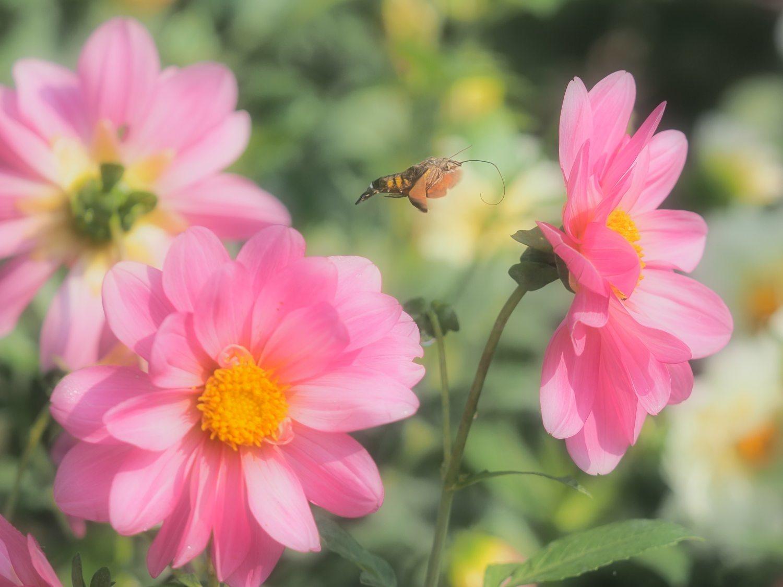 花から花へ 1   大阪市_d0286954_04261501.jpg