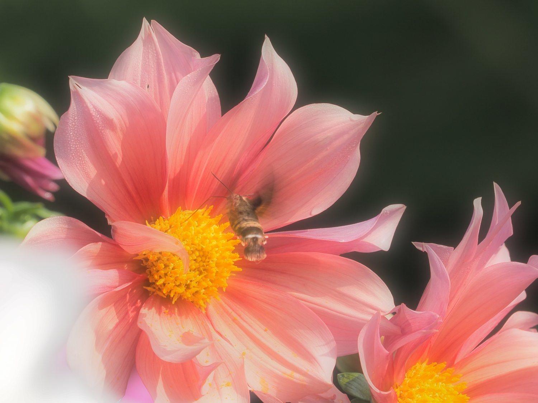 花から花へ 1   大阪市_d0286954_04263906.jpg