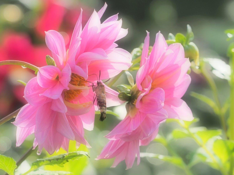 花から花へ 1   大阪市_d0286954_04265191.jpg