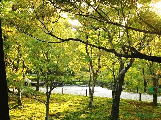 東福寺のもみじは、まだ緑    2019年11月1日_a0164068_16494705.jpg