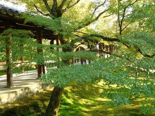 東福寺のもみじは、まだ緑    2019年11月1日_a0164068_16494790.jpg