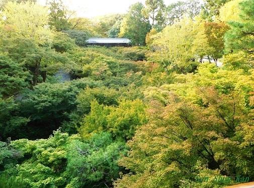 東福寺のもみじは、まだ緑    2019年11月1日_a0164068_16511976.jpg