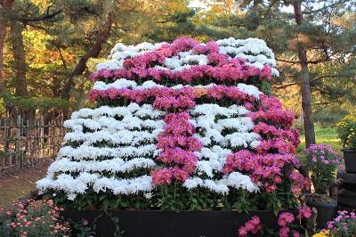 弘前城菊と紅葉まつり_2019.11.05_d0131668_153106.jpg