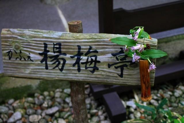 鎌倉 一条恵観山荘_f0374092_23073376.jpg