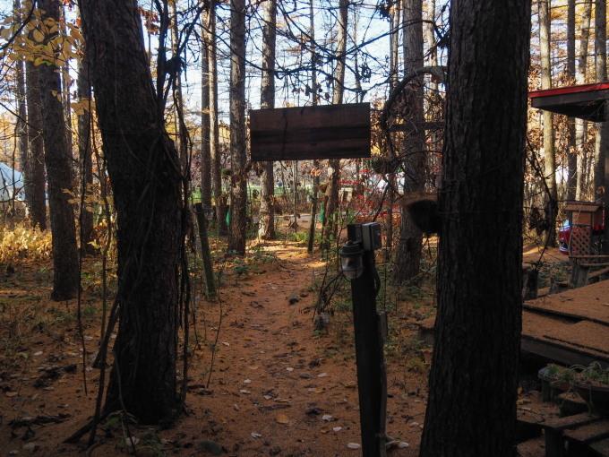 秋深まり、カラマツの紅葉とエゾリス君、庭は黄金色の絨毯に!_f0276498_12123474.jpg