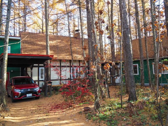 秋深まり、カラマツの紅葉とエゾリス君、庭は黄金色の絨毯に!_f0276498_12140426.jpg