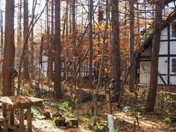 秋深まり、カラマツの紅葉とエゾリス君、庭は黄金色の絨毯に!_f0276498_12162116.jpg