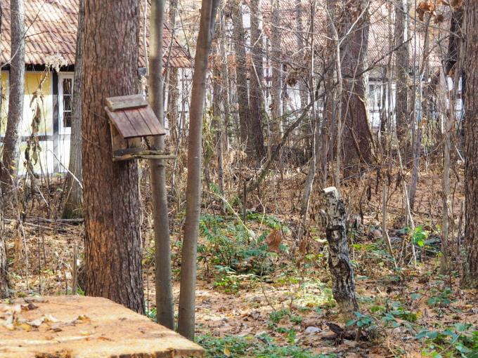 秋深まり、カラマツの紅葉とエゾリス君、庭は黄金色の絨毯に!_f0276498_12165555.jpg