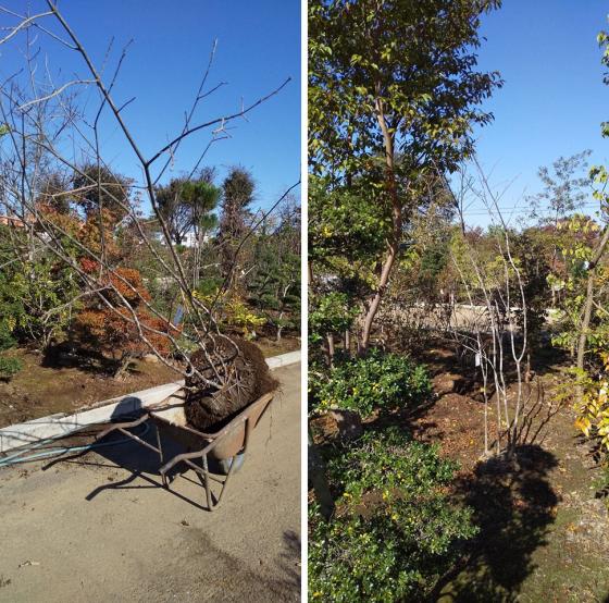 板橋の家 植栽のお手伝い_d0080906_11513996.jpg