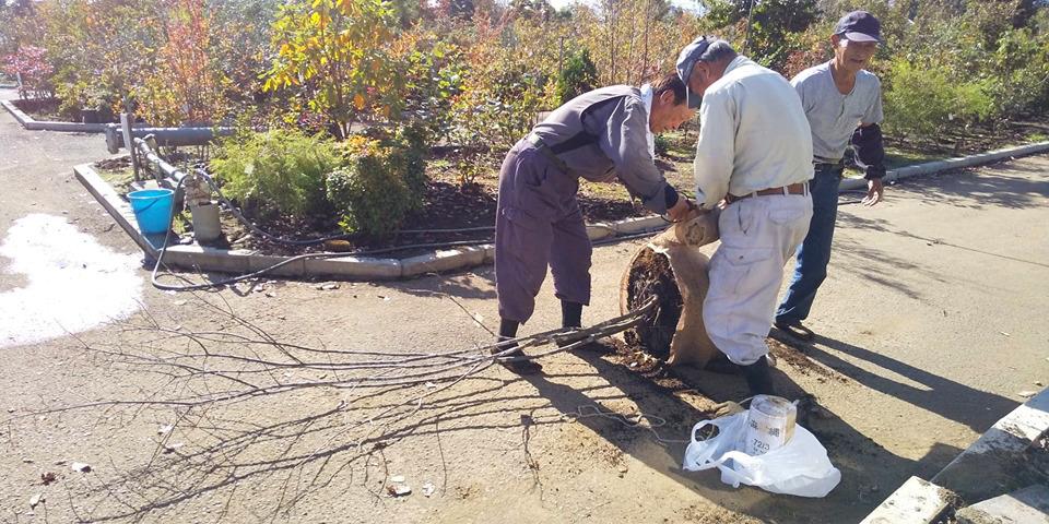 板橋の家 植栽のお手伝い_d0080906_11514069.jpg