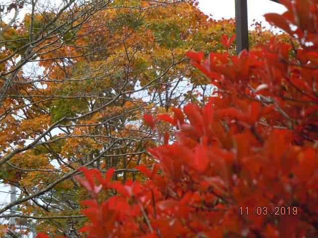 紅葉真っ盛り_f0376118_19303855.jpg