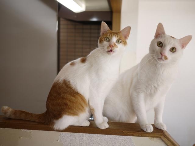 猫のお留守番 りゃんくんチロくん編。_a0143140_16133357.jpg