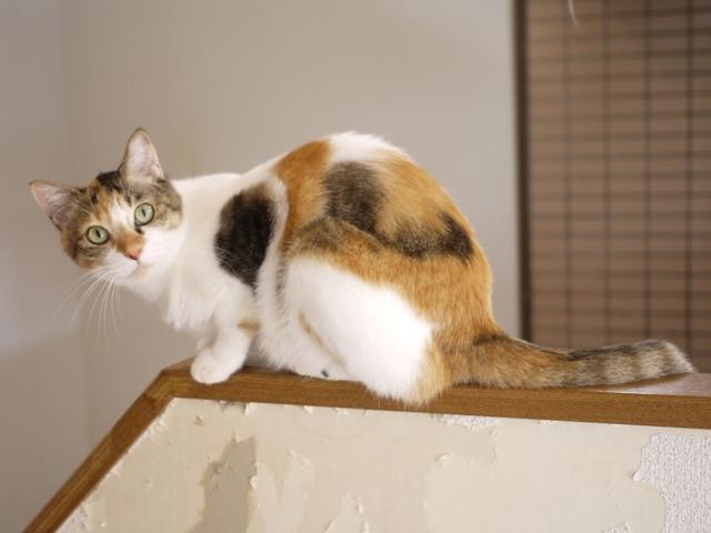 猫のお留守番 みーちゃん編。_a0143140_16223022.jpg
