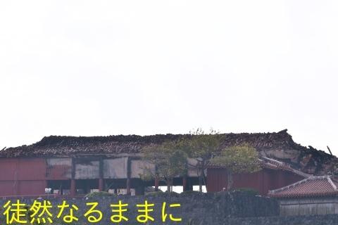 沖縄の蝶たち_d0285540_21155589.jpg