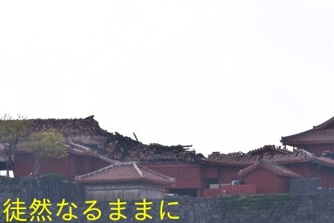 沖縄の蝶たち_d0285540_21155710.jpg