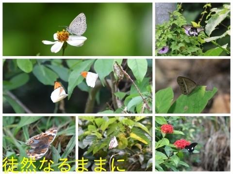沖縄の蝶たち_d0285540_21172251.jpg