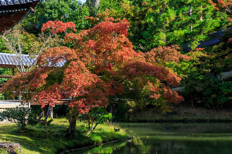 秋の始まり(高台寺)_f0155048_2251050.jpg