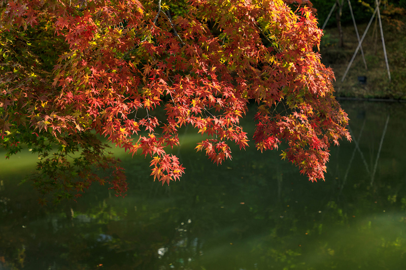 秋の始まり(高台寺)_f0155048_2251457.jpg