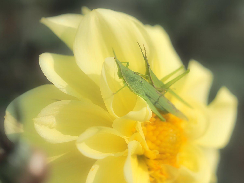 花から花へ 2   大阪市_d0286954_04353945.jpg