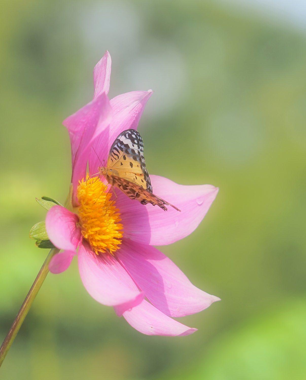 花から花へ 2   大阪市_d0286954_04354889.jpg