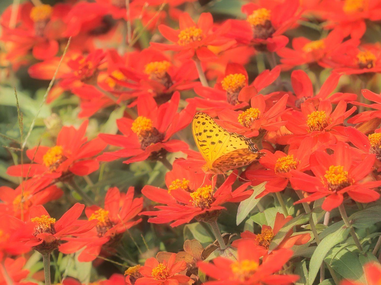 花から花へ 2   大阪市_d0286954_04360463.jpg