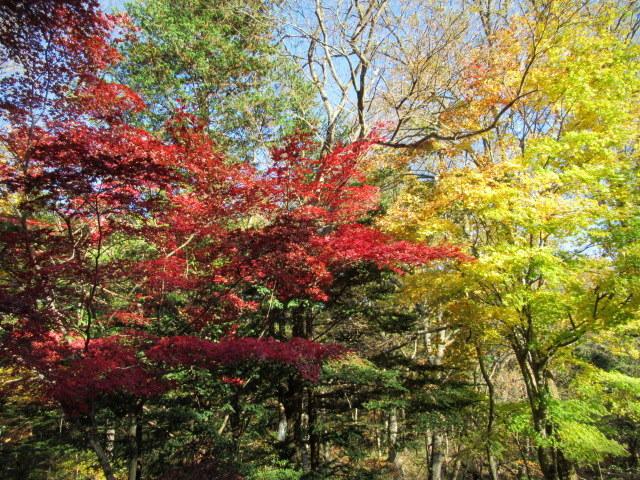 2019・軽井沢の紅葉速報⑥ * 湯川沿いの紅葉♪_f0236260_20104259.jpg