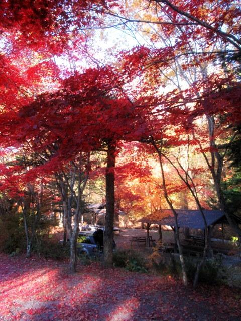 2019・軽井沢の紅葉速報⑥ * 湯川沿いの紅葉♪_f0236260_20204237.jpg