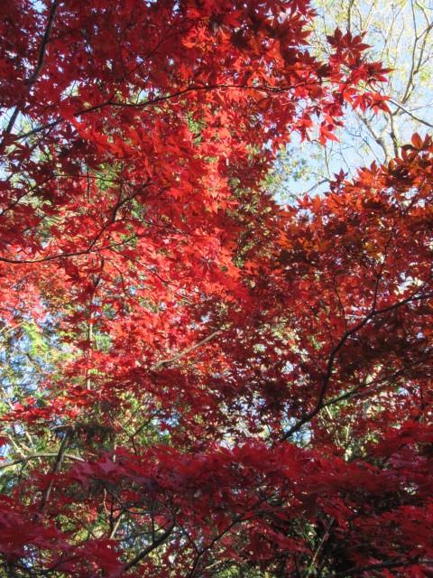 2019・軽井沢の紅葉速報⑥ * 湯川沿いの紅葉♪_f0236260_20252835.jpg