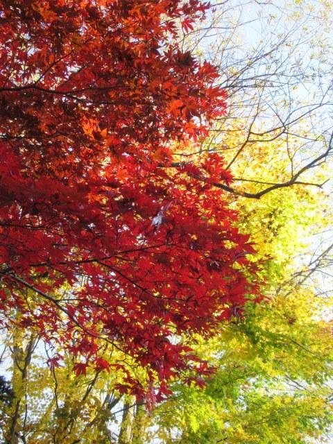 2019・軽井沢の紅葉速報⑥ * 湯川沿いの紅葉♪_f0236260_20261759.jpg