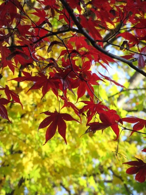 2019・軽井沢の紅葉速報⑥ * 湯川沿いの紅葉♪_f0236260_20271048.jpg