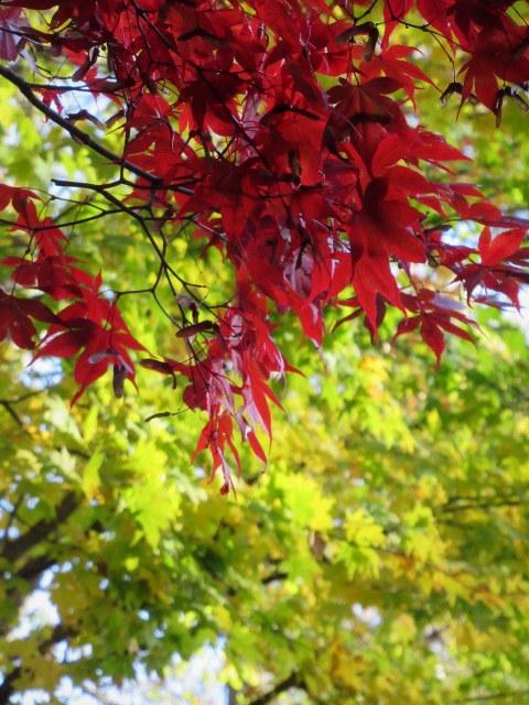 2019・軽井沢の紅葉速報⑥ * 湯川沿いの紅葉♪_f0236260_20282171.jpg
