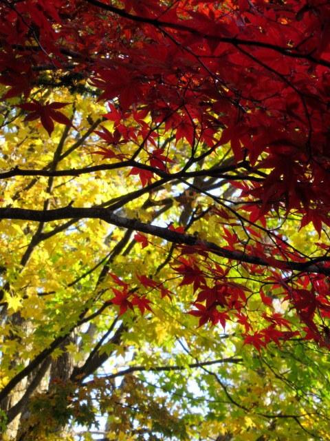 2019・軽井沢の紅葉速報⑥ * 湯川沿いの紅葉♪_f0236260_20290756.jpg